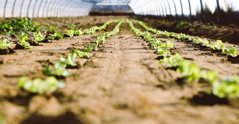 PSBリキッド・ビーズ活用:農業